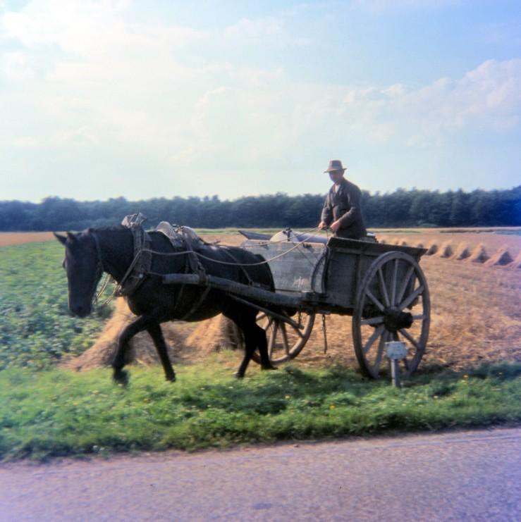 8 Dutch farmer