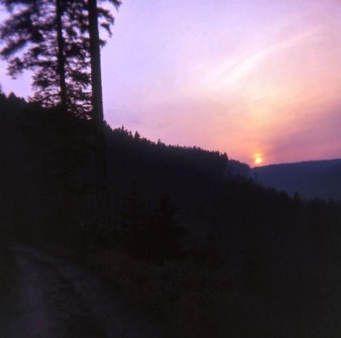 13 Black Forest T.jpg